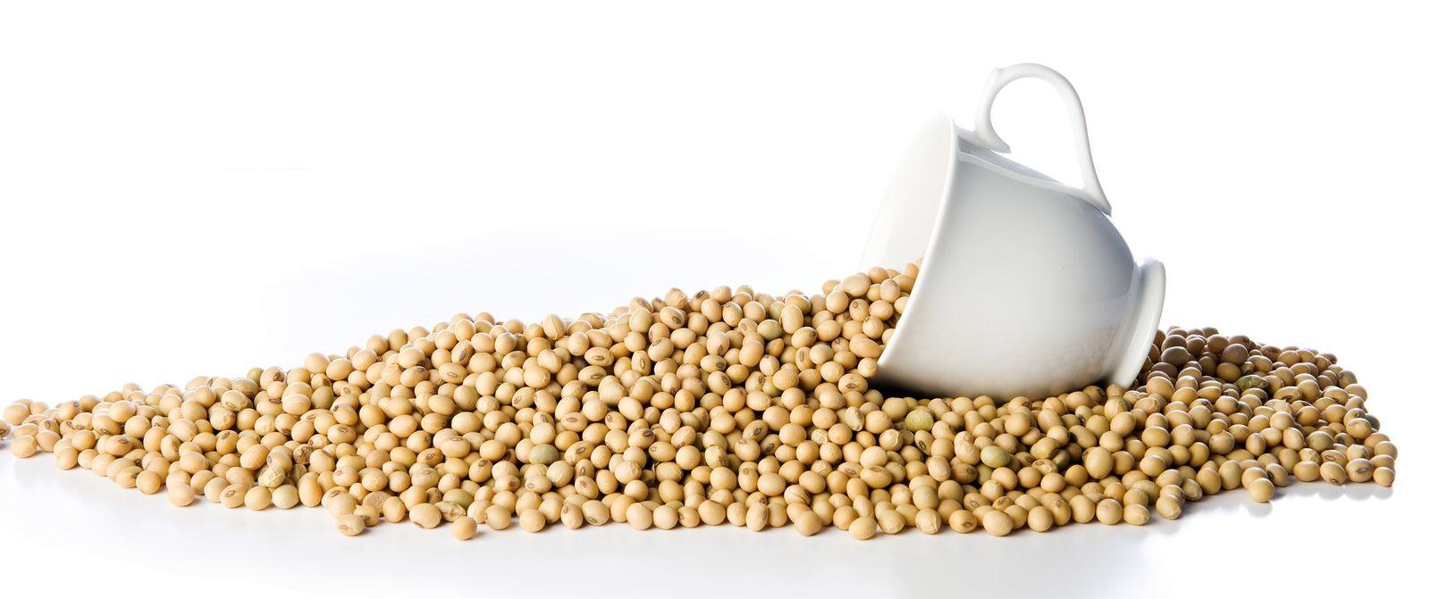 cacahuetes acido urico metabolismo de urea creatinina y acido urico remedio para aliviar crise de gota